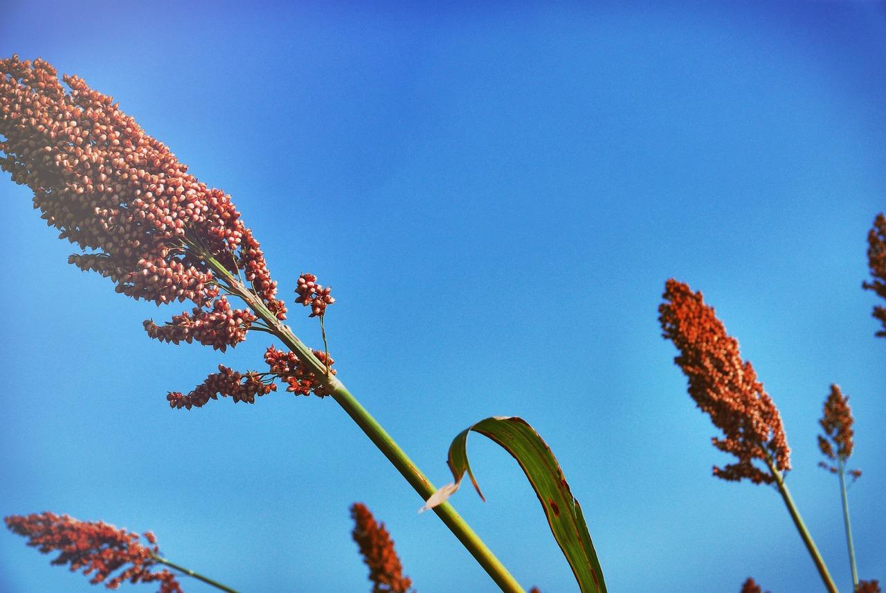 Beauty Secret Aloe Ferox: So geht Sonne!